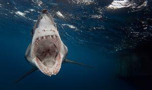 Žraloci jsou nebezpečné druhy