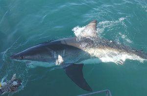 Mako Shark Attack Rychlost
