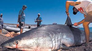 Rybáři, kteří chytili mako