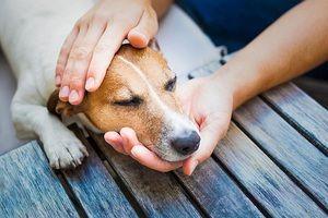 Alergie u psů: příznaky, diagnóza, léčba, prevence