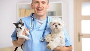 Amoxicilin pro aplikaci na zvířata je přiložen k pokynům