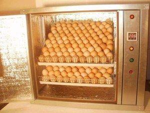 Automatický inkubátor - co to je