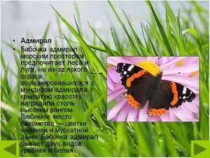 Butterfly admirál: popis, jarní forma, charakteristika druhu