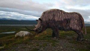 Vlněný nosorožec - biotop