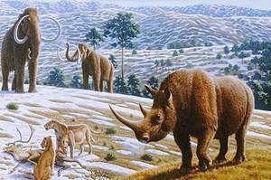 Vlnitý nosorožec - prehistorická zvířata