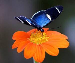 Krmení motýlů