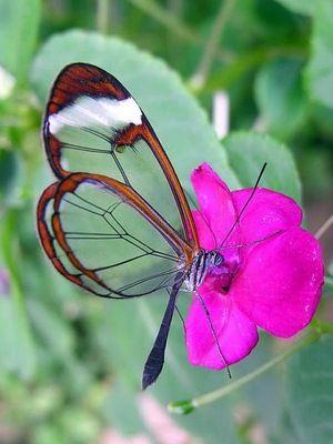 Nejkrásnější motýly