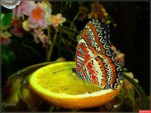 Kolik motýlů žije