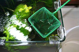 Čištění akvária doma