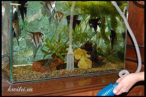 Jak vyčistit akvárium sami