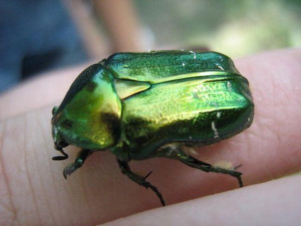 Zelená může chybět na prst člověka