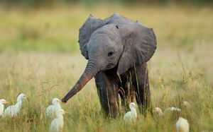 Co sloni jedí v zajetí a ve volné přírodě