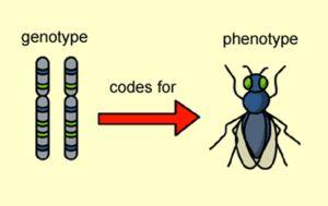 Co je fenotyp
