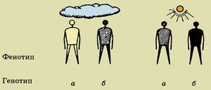 Rozdíl mezi genotypem a fenotypem