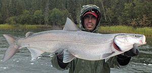 Bílé bílé ryby