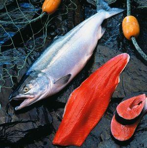 Užitečné vlastnosti ryb