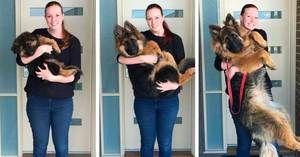 Až do jakých věkových psů roste, fyziologický vývoj