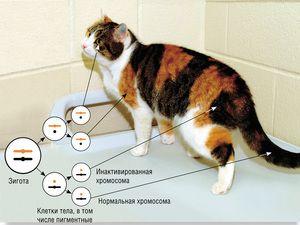 38 chromosomů u koček