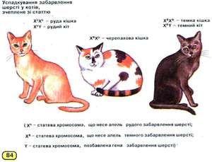 Kolik chromozomů u koček