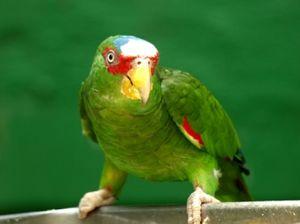 Svět papoušků