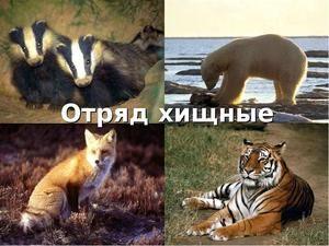 Dravé savčí zvířata: popis a druh