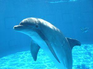 Jak delfíni spí a jak dýchají?