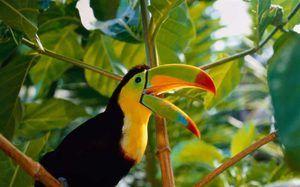 Popis exotických ptáků