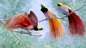 Exotické ptáky: popis