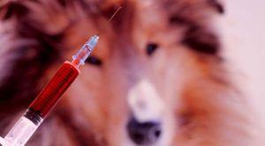 Vedení eutanázie zvířete