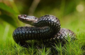 Snové hadi