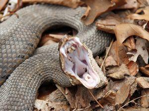 Smysl spánku o hadích
