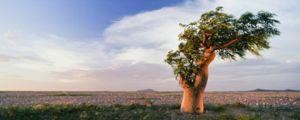 Co sní o sen stromu?