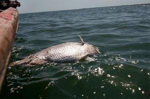 Mrtvé ryby plavou ve vodě ve snu