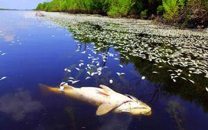 Jak vypadají mrtvé ryby?
