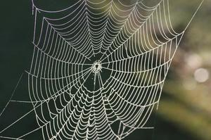 Jak vysvětlit sen o pavučinách