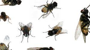 Snít hmyz