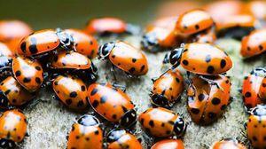 Mnoho hmyzu