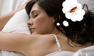 Pokud by senbální štěnice snívali - co říkají sny o knihách