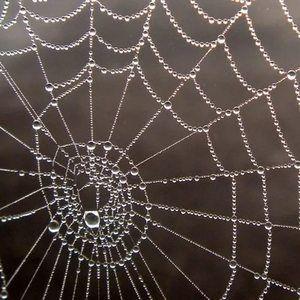 Snít pavouka na webu