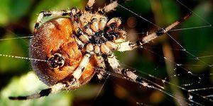 Jak vysvětlit sen o pavouci a webu