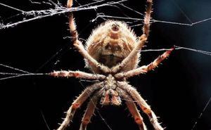 Vidět pavouka ve snu
