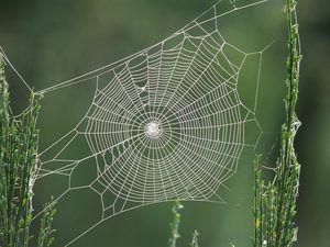 Co o tom pavoučí sen?