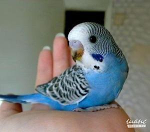 Jak přijít s jménem papouška