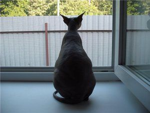 Kočka před porodem