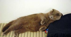 Těhotenství ve složených kočkách