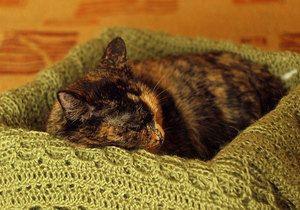 Kočka spí