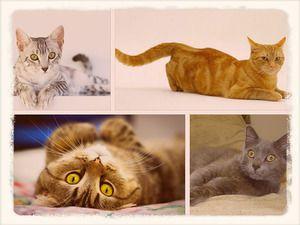 Kočky různých plemen