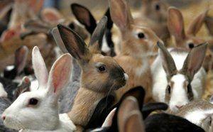 Jak pečovat o králíky: popis a vlastnosti péče