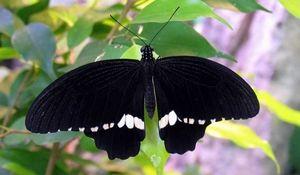 Hodnocení největších motýlů v myoy