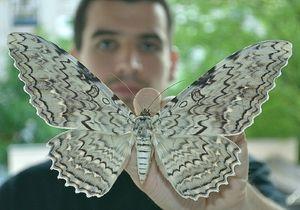 Fotografie největších motýlů na světě